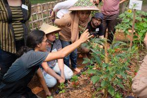 Contoh kegiatan berkebun yang dilakukan oleh Kebun Kumara