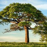 On This Year's World Tree Day, Let's Not Take Trees for Granted